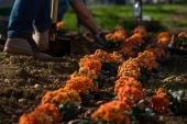 S optickou sieťou od Orangeu vyrástol aj kvetinový záhon